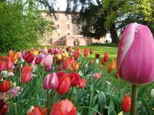 Messer Tulipano: 90 тысяч весенних цветов в замке Пралормо