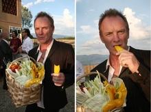 Сбор урожая оливок с плантаций, принадлежащих певцу и композитору Стингу