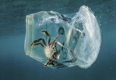 229 тысяч тонн пластика попадают ежегодно в Средиземноe море