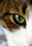 Изображение пользователя Оксана-cat.