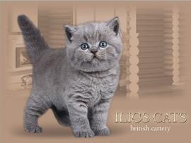 Изображение пользователя ilioscats.