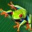 Изображение пользователя Froggy Farm.