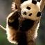 Изображение пользователя Green-panda.