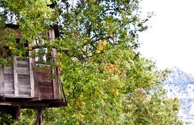 Деревня на деревьях в Пьемонте: секретное место между мечтой и реальностью