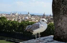 Столичные названия и поговорки: 5 любопытных фактов о Риме