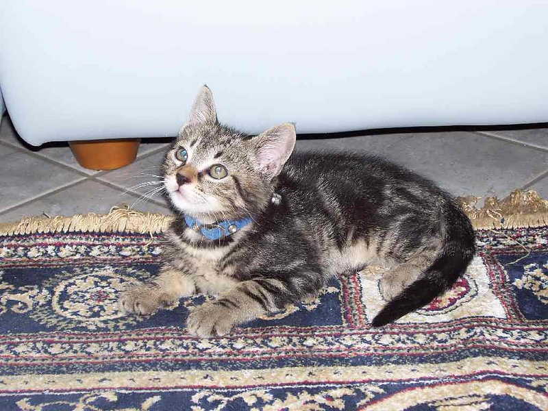 Ищу дом для кота по имени GIGGIO. Помогите!