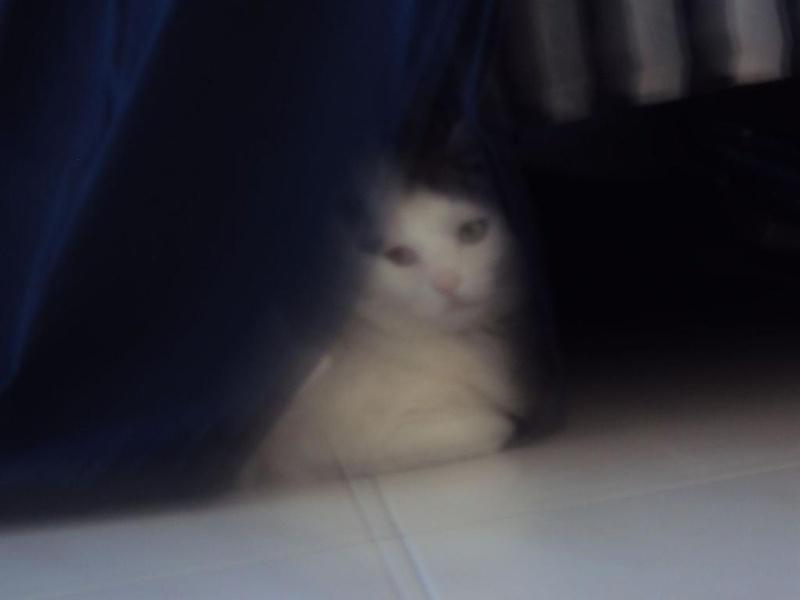 Кошачья мадонна
