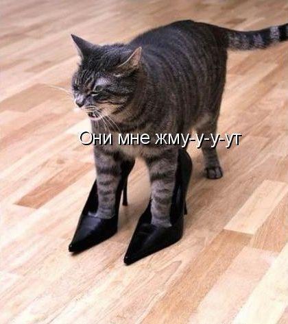 Главное - каблуки!