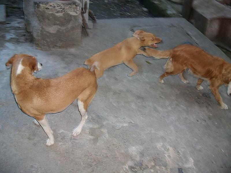 Наши охотничьи собаки.