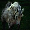 Лошади (фотографии, рисунки ....)