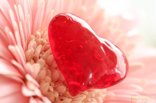 С днем Святого Валентина!!!!