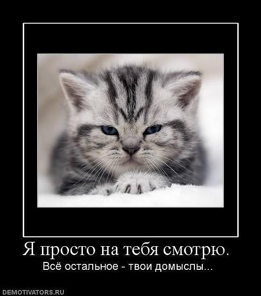 мордочка и эмоции от неё ;)))