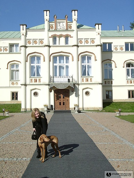 собака живущая в отеле в Кракове.