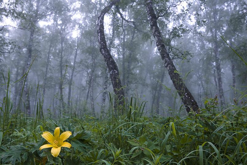 Storie della foresta