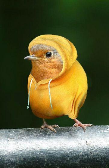 Крутой птиц