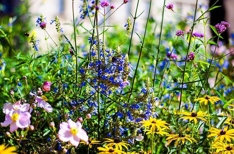 Цветы королевы .