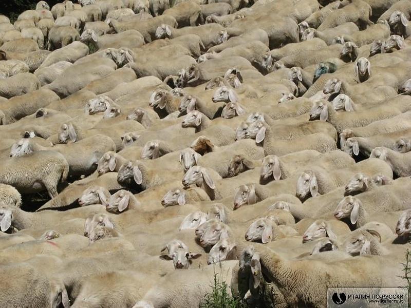 Симпатишные овечки.