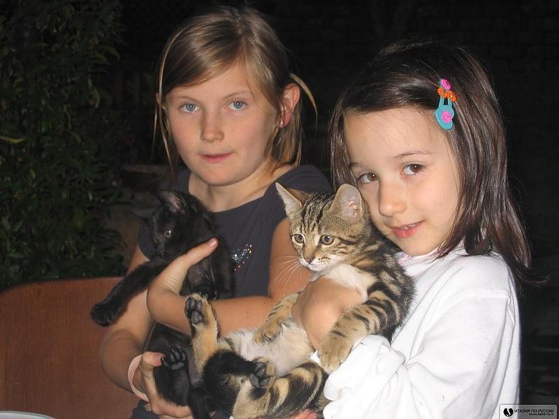 Девчата и котята