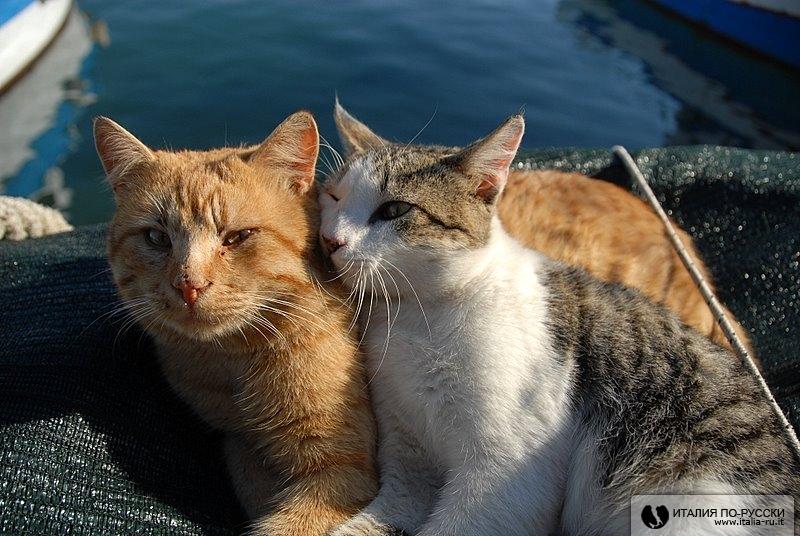 про котиков