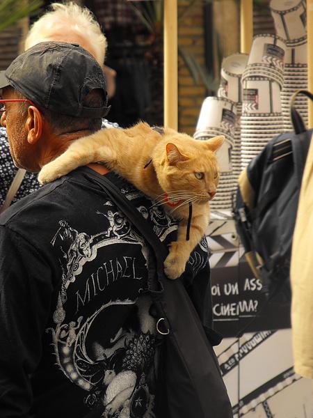 Кошак-наездник