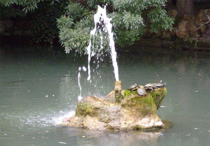 Черепашковый пруд