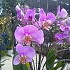 ~Bahan~в парке орхидей