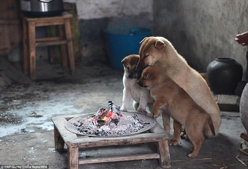 всем хочется тепла