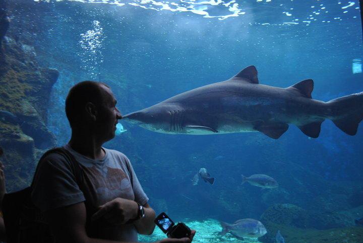 Нос к носу с акулой....  ))))