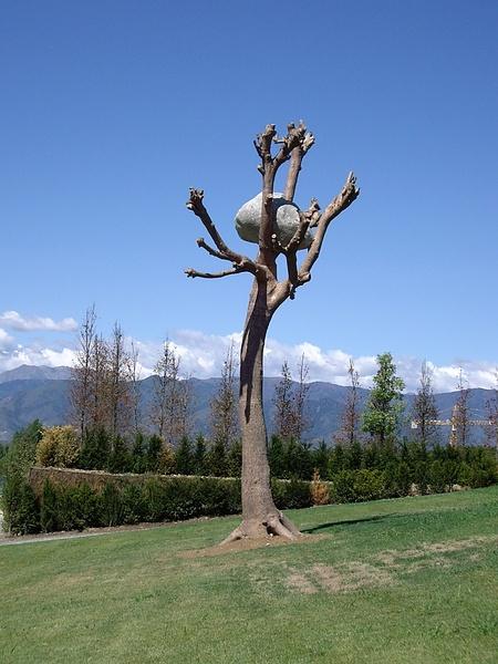 вот такое странное дерево
