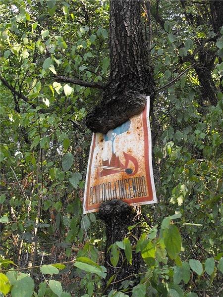 "Табличка об опасности пожара ""в руках"" дерева"