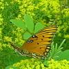 бабочка  красотищя гляньте