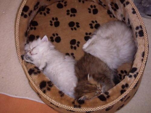 Интересные моменты из жизни котов.