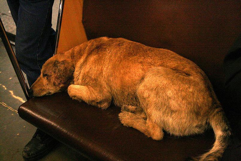 Пес в метро...