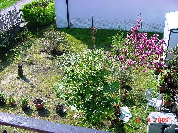 Весна, +20, всё оживает цветёт и распускается - а смотреть грустно!
