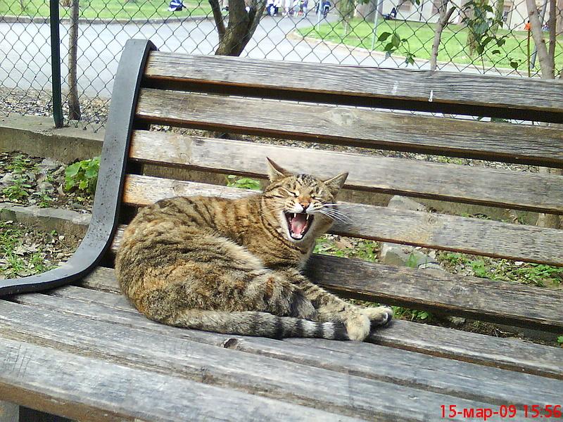 Римский котяра.