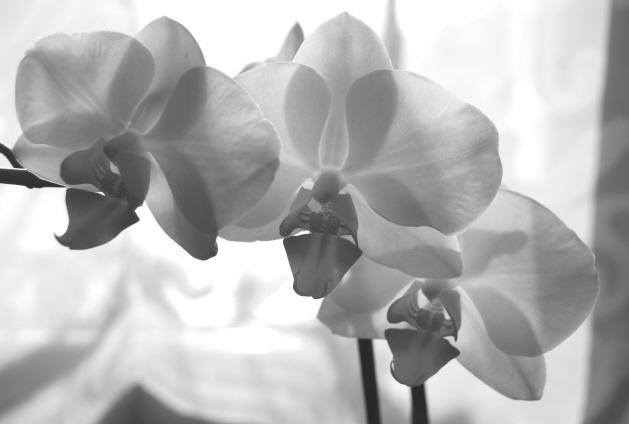 Триптих (орхидеи)