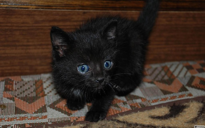 котенок Легионера (2)