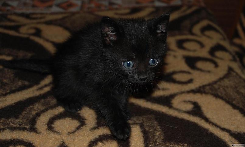котенок Легионера