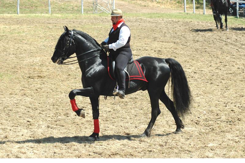 Кому коня?