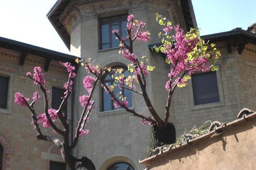 Рим цветёт