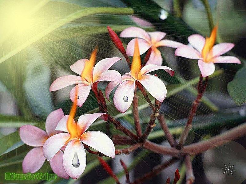 фото -цветочки