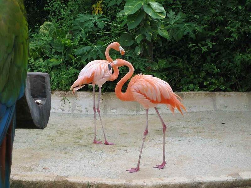 Розовый фламинго-дитя заката....