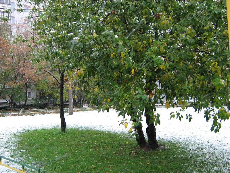 Снег на зеленой траве