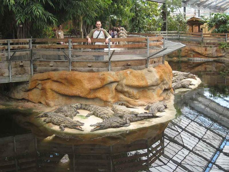 На крокодильей ферме. Франция.