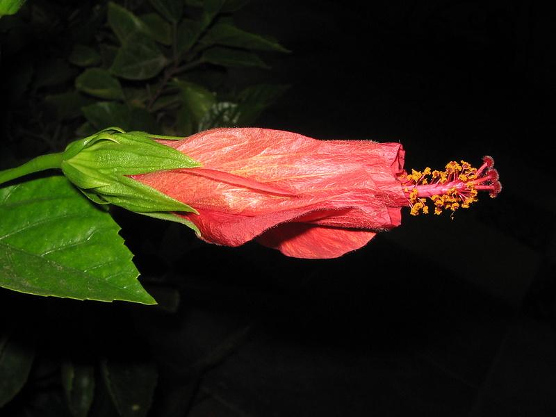 Цветочек ближе к ночи.