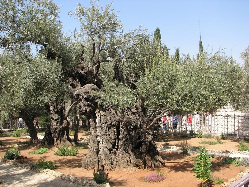 Экскурсия в Иерусалим накануне Пасхи 1