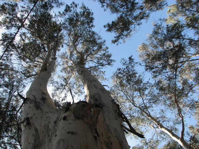 И древо жизни пышно зеленеет.