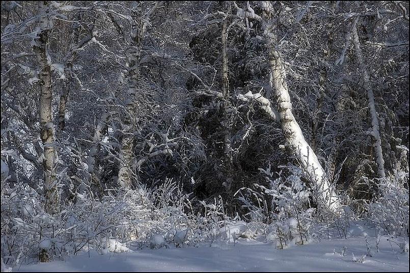 Зимняя картинка