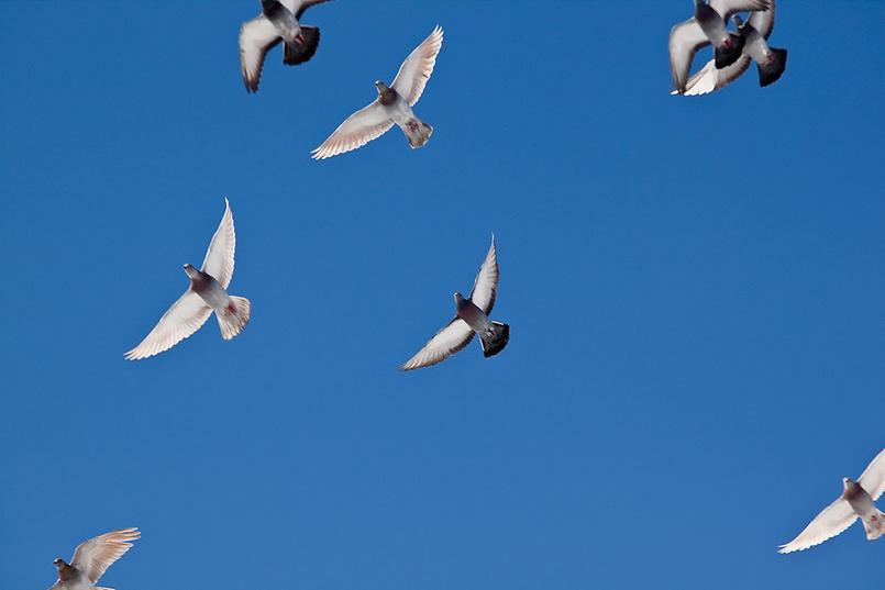 Словно птица в небесах