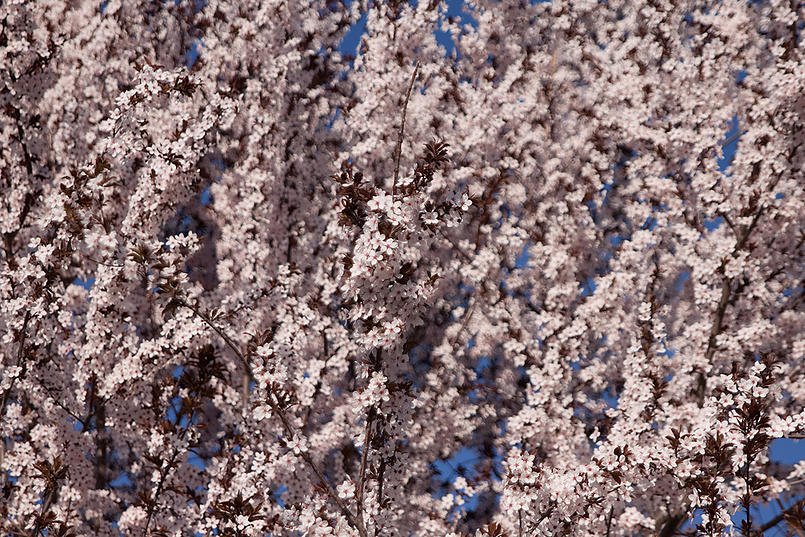 Немного весны 2